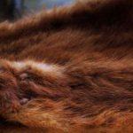 Campagna Toxic Fur