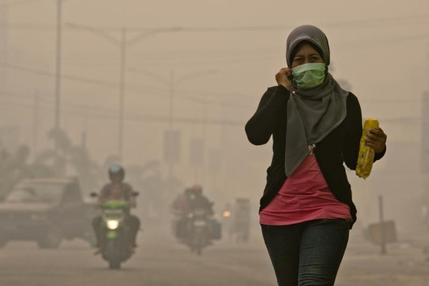 Forest Fires in Sumatra di Ulet Ifansasti / Greenpeace
