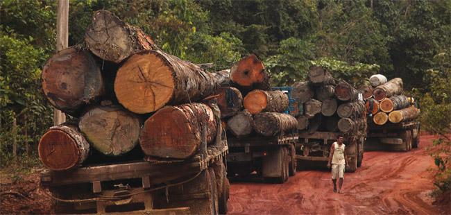 legno-illegale-brasile
