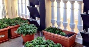 ortinsu orto balcone