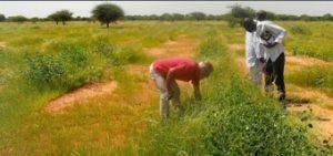 WeForest_BurkinaFaso_ridotta