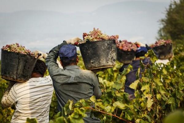 Lavoro-nero-e-i-nuovi-schiavi-in-agricoltura-600x400