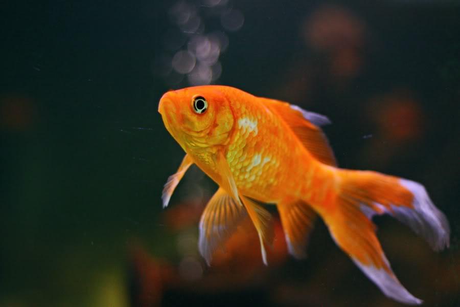 Pesce probiotico for Immagini di pesci disegnati