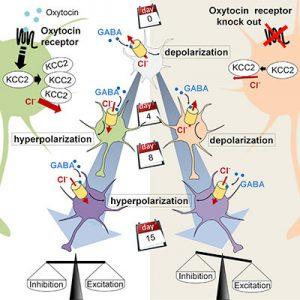 ossitocina