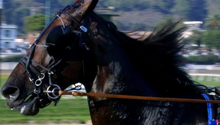 cavalli2