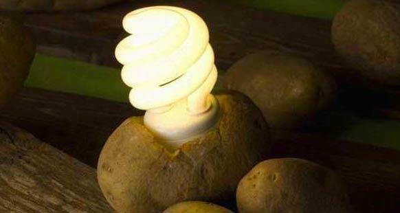 lampadina con patata