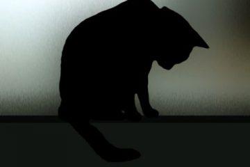 Zoorastia: l'Ue emana nuove leggi sul benessere degli animali