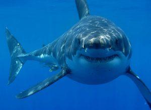 squalo che ride