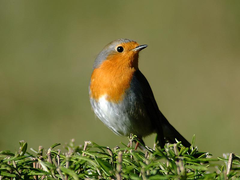 Bracconaggio in sulcis il progetto europeo contro la caccia - Uccelli che sbattono contro le finestre ...