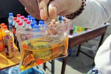 tartarughe portachiave