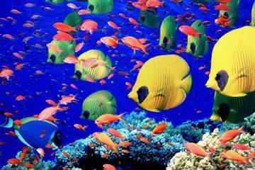 bariera corallina biodiversita