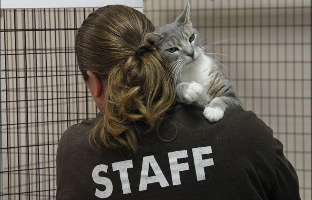 gatto animali maltrattati