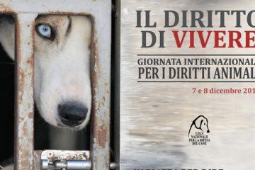 Giornata internazionale per i Diritti Animali