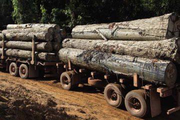 trasporto legno illegale