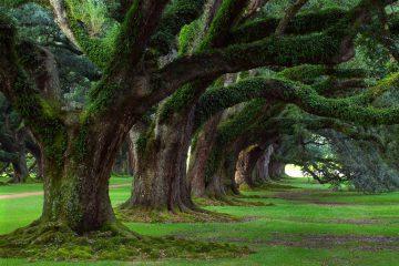 alberi spettacolari