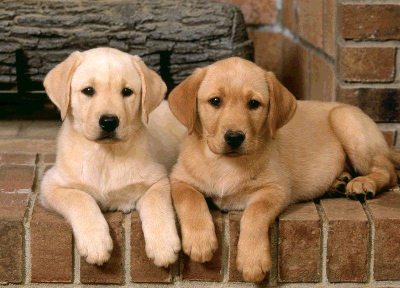Nasce mutua per cani e gatti, costerà 120 euro all'anno