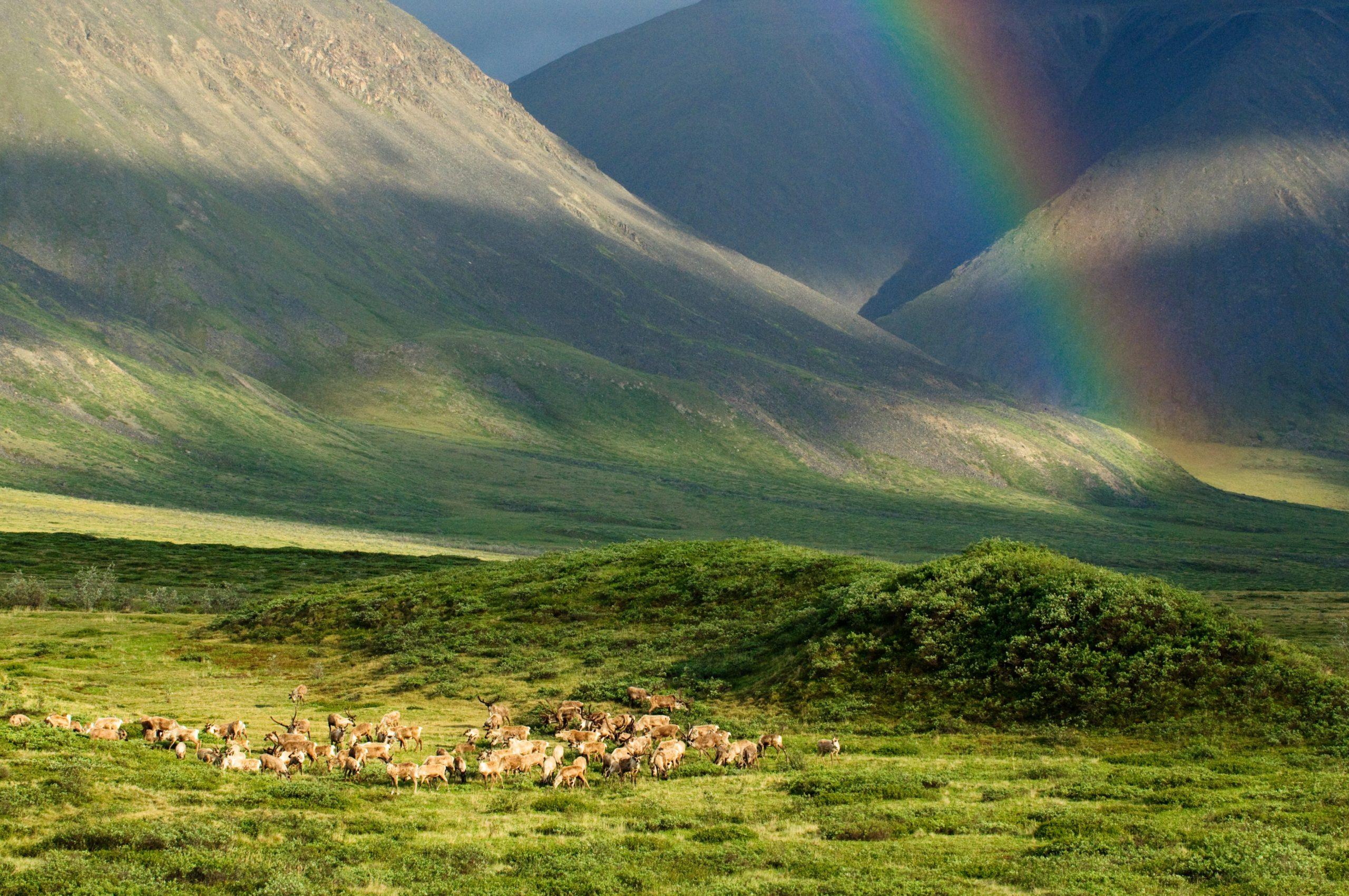 Alaska artic refuge